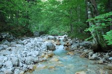 River (Triglav Nat