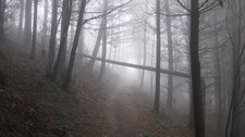 Misty mountain bike ride in the Black Forest (Freiburg) resize