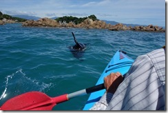 Kayaking with the seals (Takaka 2013)