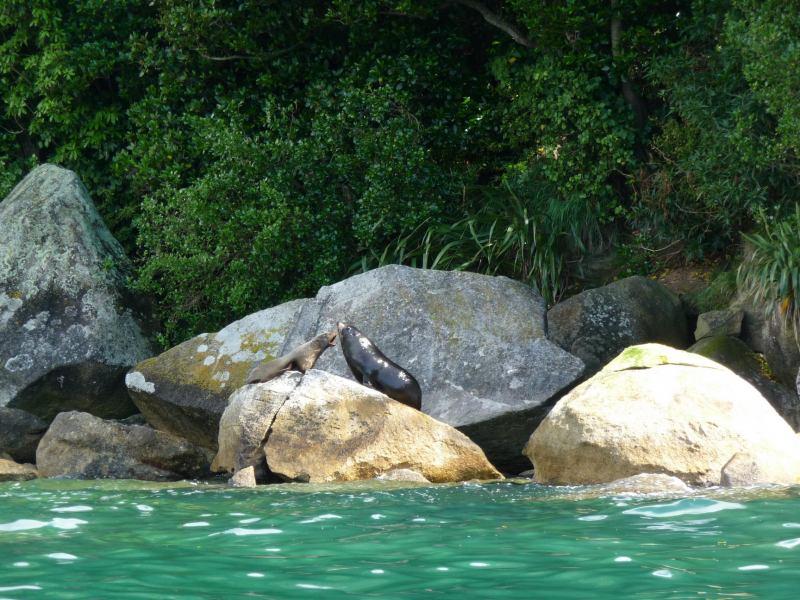 Seal vs Seal (Abel Tasman)