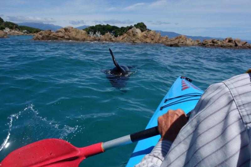 Kayaking with the seals (Takaka 2013)