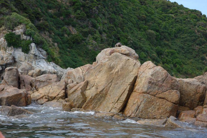 Seal snoozing on the rock (Takaka 2013)