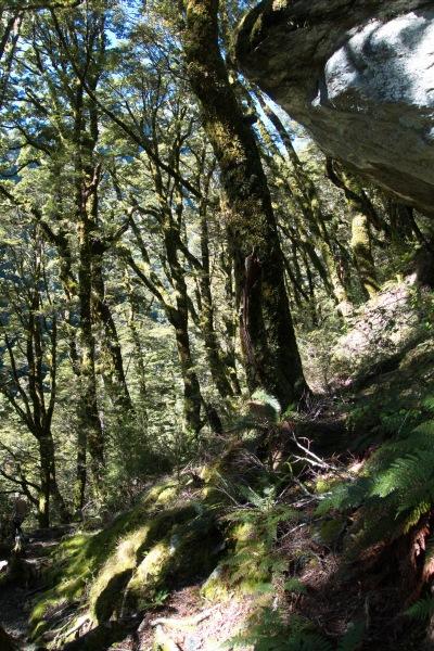 Steep green (Rabbit Pass Tramp Dec 2014)