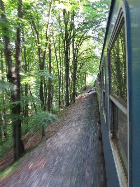 On the train in the forest 2 (Hungary)