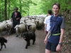Julian and sheep (Feiburg, Germany)