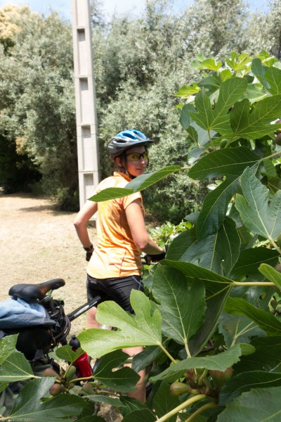Leonie and fig tree (Corsica)