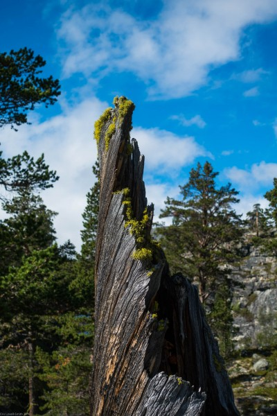 A stump (Cycle Touring Norway 2016)