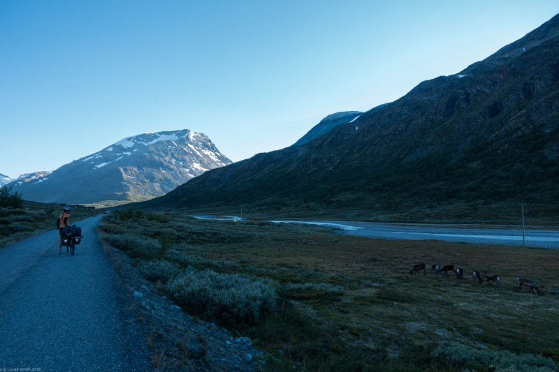 Leonie and the rudolphs (Cycle Touring Norway 2016)