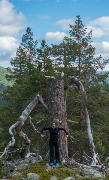 Leonie being a tree giant (Cycle Touring Norway 2016)