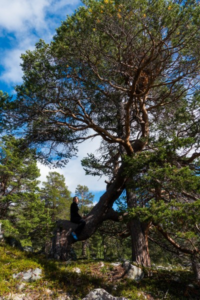 Leonie riding a tree 2 (Cycle Touring Norway 2016)