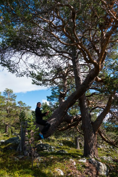 Leonie riding a tree 3 (Cycle Touring Norway 2016)
