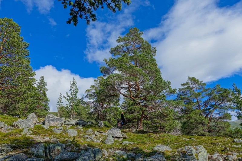 Leonie riding a tree (Cycle Touring Norway 2016)