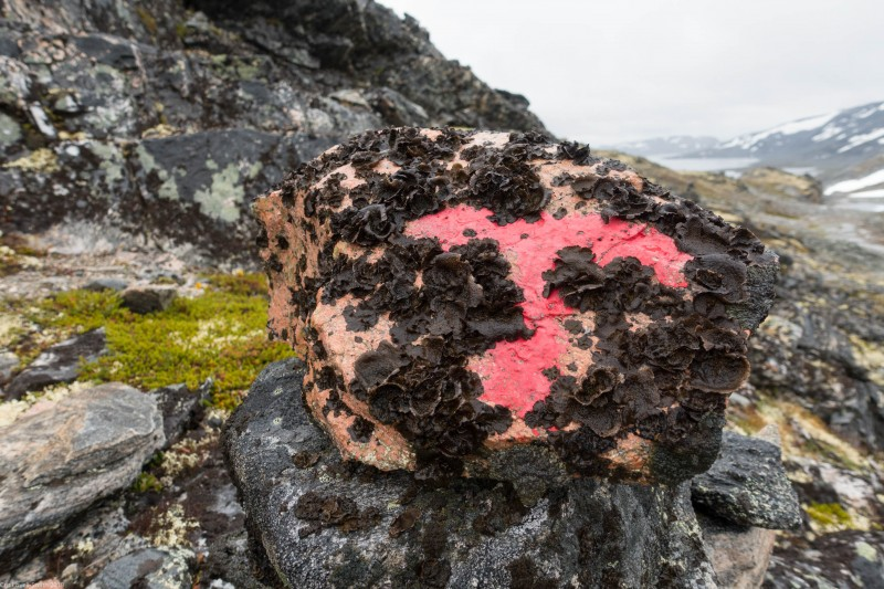 The red T (Cycle Touring Norway 2016)