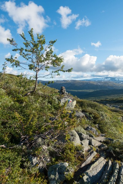 View (Cycle Touring Norway 2016)