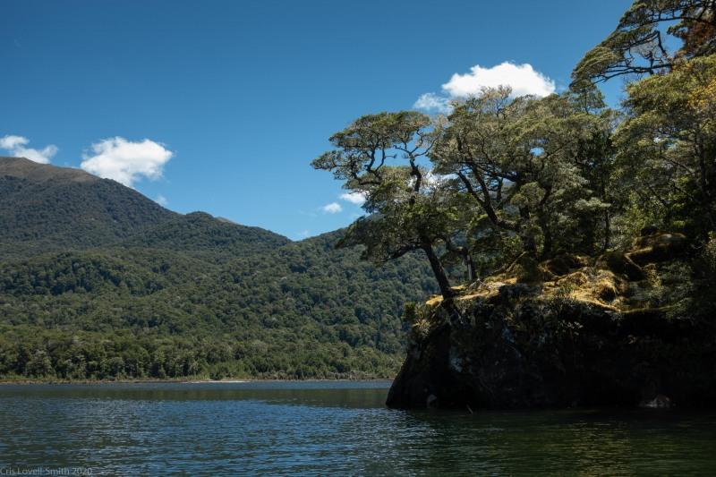 Lake and trees (Fiordland Dec 2020)