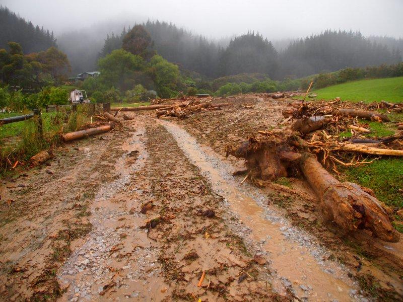 Large logs on drive way (Ligar Bay)
