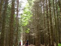Road cycling in the forest (Freiburg, Germany)
