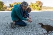 Mum and Melody feeding a weka (Taupo Point)