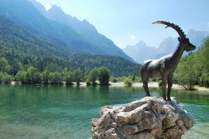 Animal and lake (Triglav Nat. Park, Slovenia)