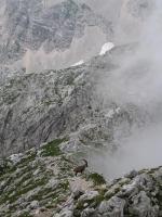 Animal on ridge (Triglav Nat. Park, Slovenia)