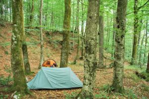 Camp near lake (Slovenia)