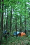 Campsite amongst the trees (Triglav Nat. Park, Slovenia)