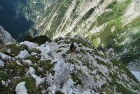 Cris amongst rubble (Triglav NP, Slovenia)