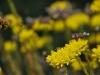 Bee departs (Lago di Garda)
