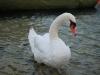 My good friend (Lago di Garda, Italy)