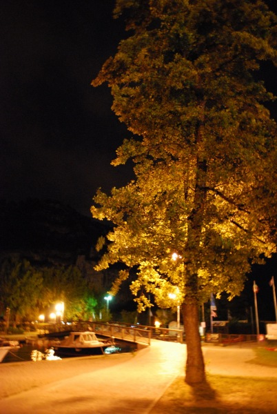 Tree at night (Lago di Garda)