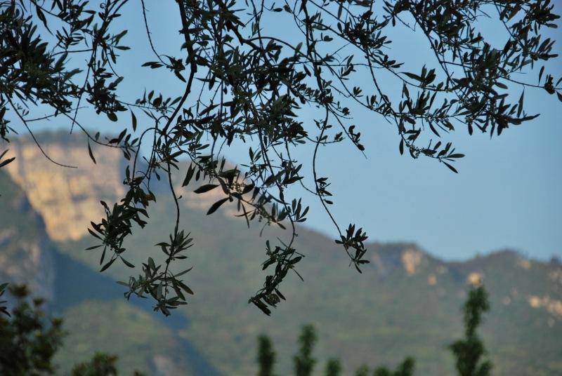 Twigs (Lago di Garda)