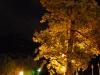 Tree at night (Lago di Garda)