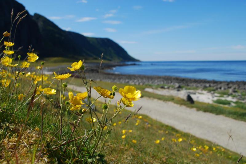 230 (Lofoten, Norway)