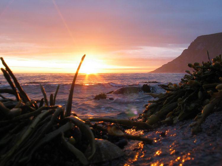 Seaweed (Lofoten, Norway)