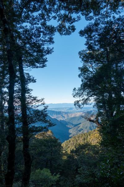 Trees (Walk up Mt Arthur July 2021)