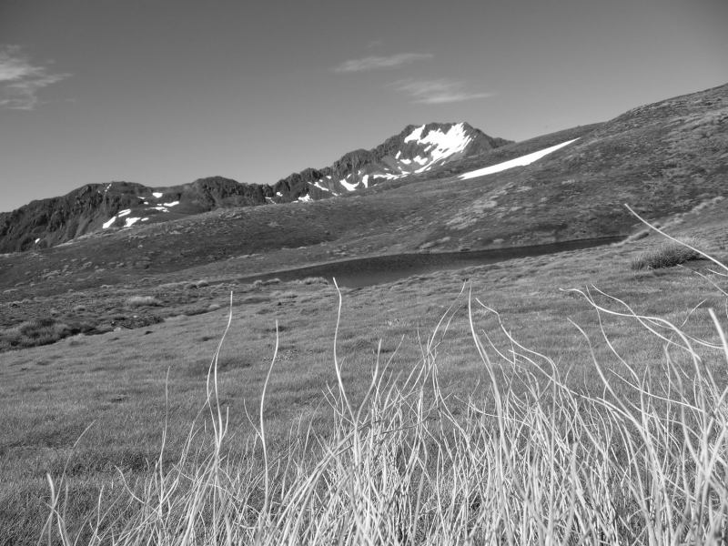 B and W (Lewis Pass Tops)