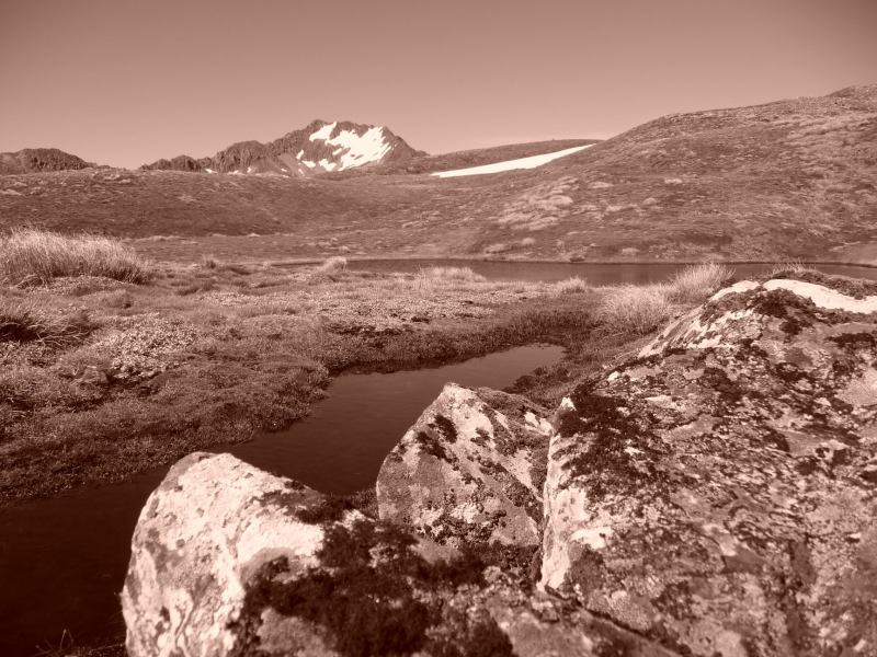 Sepia goodness (Lewis Pass Tops)