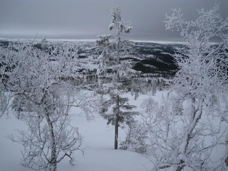 Frozen trees (Norway)