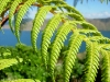 classy-fern-maud-island_resize