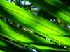 green-fern-leaves-ballroom-overhang-tramp_resize