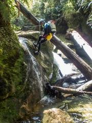 Craig lowering himself down (Canyoning Waterfall Creek)