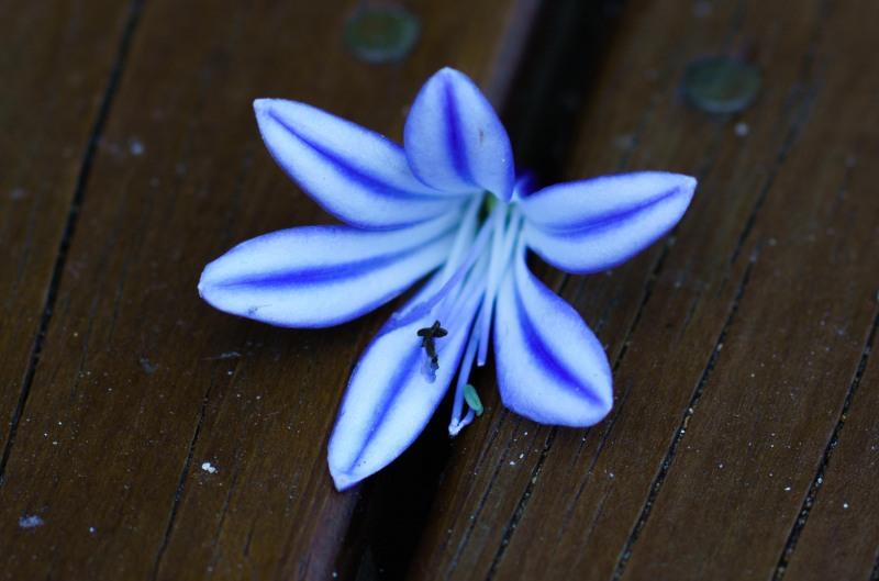 Flower on the deck (Golden Bay Dec 2018)
