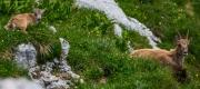 Mountain goats (Summer Holidays 2016)_1