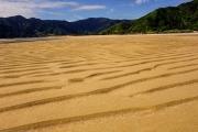 Nice golden sand (Wainui, Golden Bay)