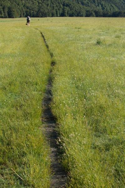 Walking through the grass (Rabbit Pass Tramp Dec 2014)