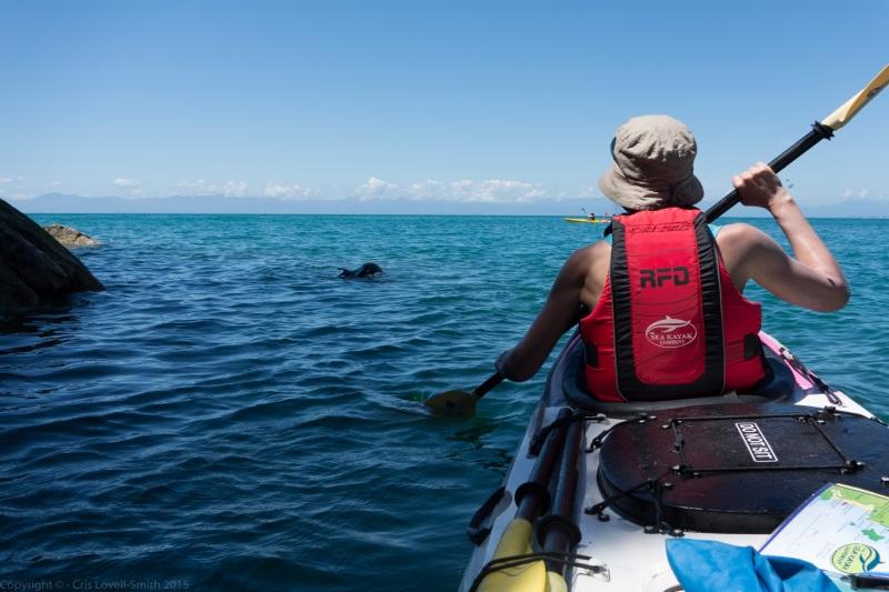 Following a seal (Seakayaking Abel Tasman Dec 2014)