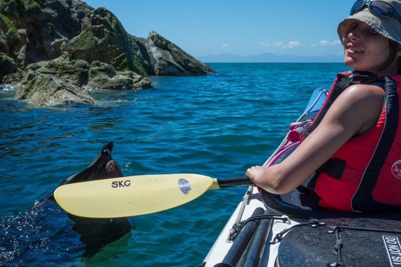 Leonie finds a seal (Seakayaking Abel Tasman Dec 2014)