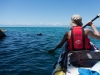 Following a seal (Seakayaking Abel Tasman Dec 2014)