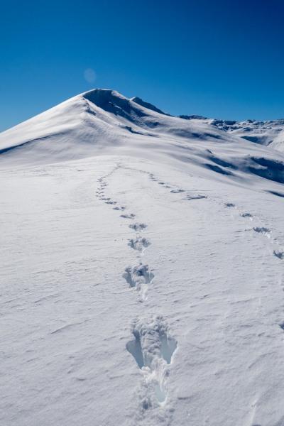 Wallabies (Ski Touring Camp Stream Hut Aug 2021)
