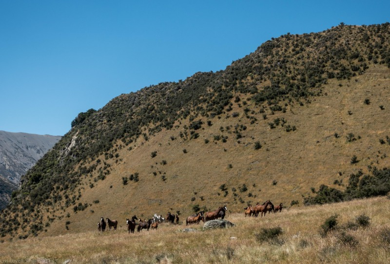 Wild horses (Cycling St James)